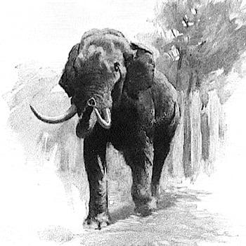 ElephantWalk350
