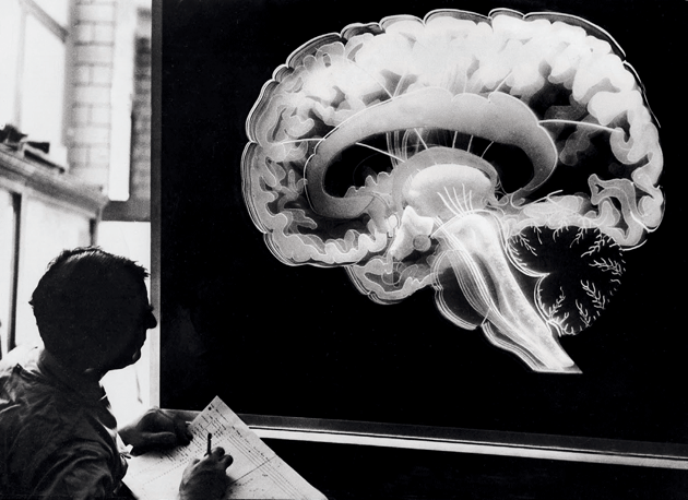 A scientist studying a model of a human brain, 1960 © akg-images/ullstein bild