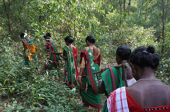 Jamuna Tudu leads the Muturkham women through the forest outside their village.
